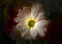 20140804233823-z-flor.jpg