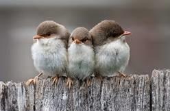 20160213010112-zzz-birds1.jpg